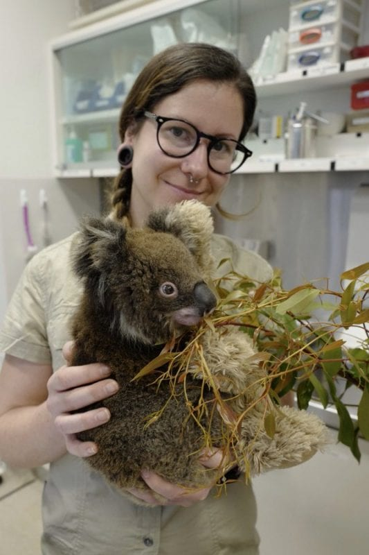 Photo: Czech carer from Zoo Prague, Katka Seemannová, who has been helping koalas in Healesville Sanctuary in Australia since 6th February. Source: Prague Zoo.